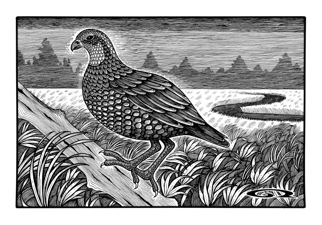 Best in Show Art Auction to Benefit Paws and Affection - Bobwhite Quail in the Bog